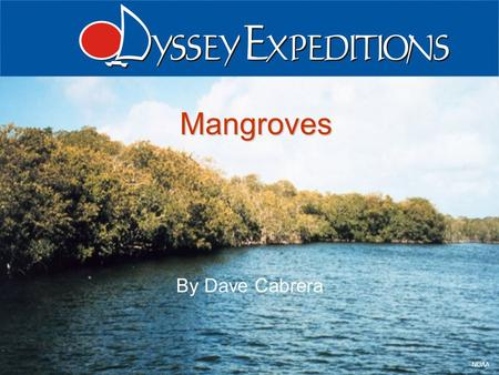 Odyssey Expeditions - Mangroves 1 NOAA Mangroves By Dave Cabrera.