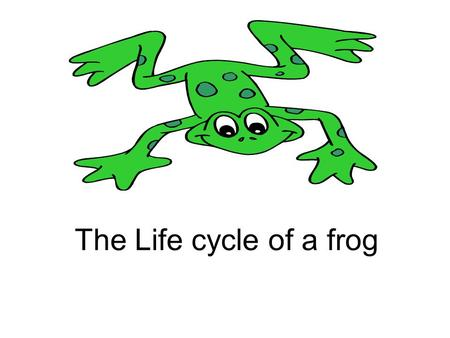 The Life cycle of a frog. From tadpole to frog A female frog lays thousands of eggs in spring. She lays them near still water in woodlands and bogs. The.