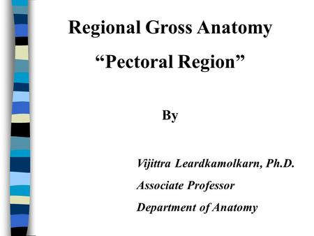 Regional Gross Anatomy