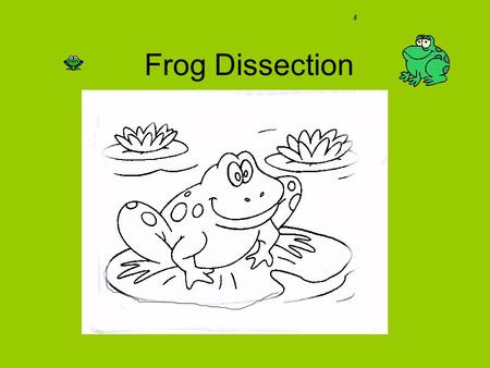 Frog Dissection. The mouth, nostrils, and eyes 1. Nictictating membrane- Protects eyes (similar to an eyelid) 2.Tympanic membrane – the ear drum -Collects.
