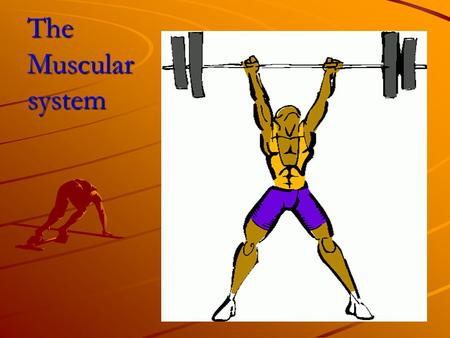 The Muscular system. What is a muscle? There are 2 main kinds of muscle: Skeletal – muscle found surrounding our skeleton. We can consciously control.