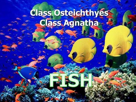 Class Osteichthyes Class Agnatha. FINS Dorsal (2): Stabilization Dorsal (2): Stabilization Pectoral (2): Steering & stopping Pectoral (2): Steering &