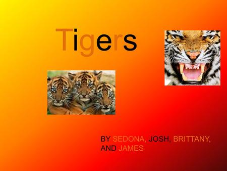 Tigers BY SEDONA, JOSH, BRITTANY, AND JAMES.