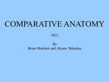 COMPARATIVE ANATOMY 3023 By Brian Matchett and Alyson Walaskay.