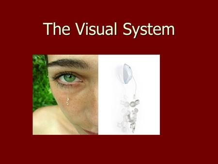 The Visual System. Light Enters the eye as electromagnetic radiation Enters the eye as electromagnetic radiation Travels in a wave that vary in amplitude.