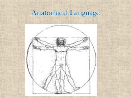 Anatomical Language. Anatomical Position Anatomical position – the subject stands erect facing the observer, with the head level and the eyes facing forward.