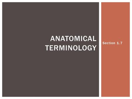 Section 1.7 ANATOMICAL TERMINOLOGY.  Try your best to write a sentence for each of the following words. When possible, use anatomical parts in the sentence.
