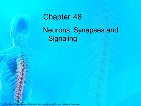 Chapter 48 Neurons, Synapses and Signaling.
