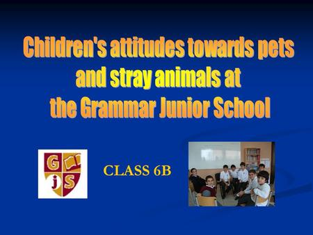 CLASS 6B. 2The Grammar Junior School Introduction We were interested about children's attitudes towards pets and stray animals. We wanted to know how.