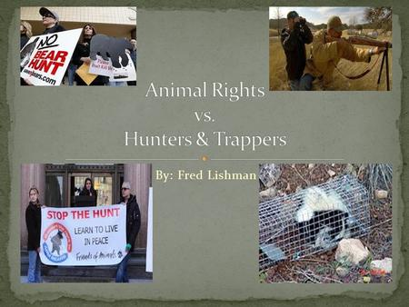 By: Fred Lishman. Animal rights activists want animals to have the same rights as humans do. Hunting and trapping is unnecessary and cruel. Animals don't.