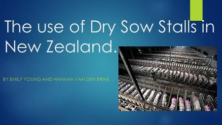 The use of Dry Sow Stalls in New Zealand. BY EMILY YOUNG AND HANNAH VAN DEN BRINK.