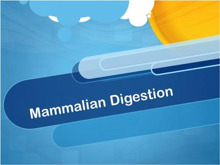 Mammalian Digestion. Mammalian digestion In heterotrophic organisms the digestive system provides the means by which nutrients are taken in and broken.
