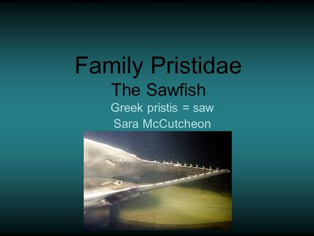 Family Pristidae The Sawfish Greek pristis = saw Sara McCutcheon.