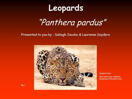 "Leopards ""Panthera pardus"" Adapted from:  dict/phrase/73/leopard.html: Presented to you by : Saliegh Jacobs & Laurenne Snyders."