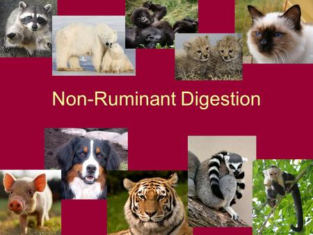 Non-Ruminant Digestion