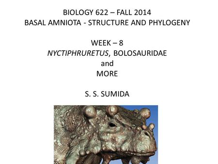 BIOLOGY 622 – FALL 2014 BASAL AMNIOTA - STRUCTURE AND PHYLOGENY WEEK – 8 NYCTIPHRURETUS, BOLOSAURIDAE and MORE S. S. SUMIDA.