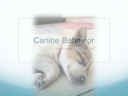 Canine Behavior Vet Science. How Dogs Communicate Vocalizations Body Postures Direct Contact Scents or Smells.