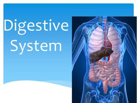 The Digestive System Explain The Structure Of The