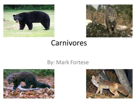 "Carnivores By: Mark Fortese. Carnivora Comes from the Latin ""caro"", meaning ""flesh"", and ""vorare"", meaning ""to devour"" Order of mammals 269 species world."