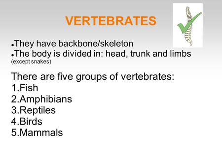 VERTEBRATES They have backbone/skeleton The body is divided in: head, trunk and limbs (except snakes) There are five groups of vertebrates: 1.Fish 2.Amphibians.