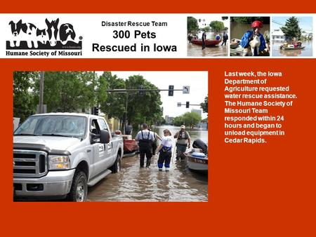 Disaster Rescue Team 300 Pets Rescued in Iowa Last week, the Iowa Department of Agriculture requested water rescue assistance. The Humane Society of Missouri.