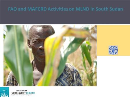 FAO and MAFCRD Activities on MLND in South Sudan Author SOUTH SUDAN.