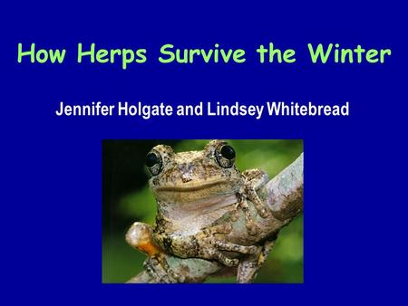 How Herps Survive the Winter Jennifer Holgate and Lindsey Whitebread.