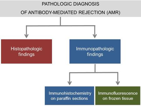 PATHOLOGIC DIAGNOSIS OF ANTIBODY-MEDIATED REJECTION (AMR) Histopathologic findings Immunopathologic findings Immunohistochemistry on paraffin sections.