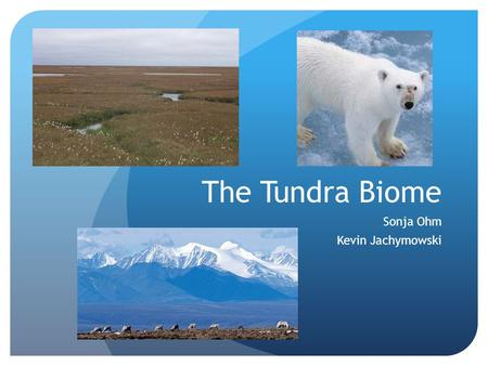 The Tundra Biome Sonja Ohm Kevin Jachymowski. General Description - Location Located on in the Northern Hemisphere Covers about 1/5 of the Earths land.