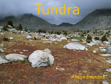 Tundra Alison Emmons. Defining Characteristics Cold, windy, and little precipitation Long winters, short summers Low biotic diversity Permafrost.