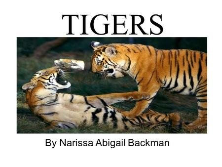 TIGERS By Narissa Abigail Backman. Name three things?