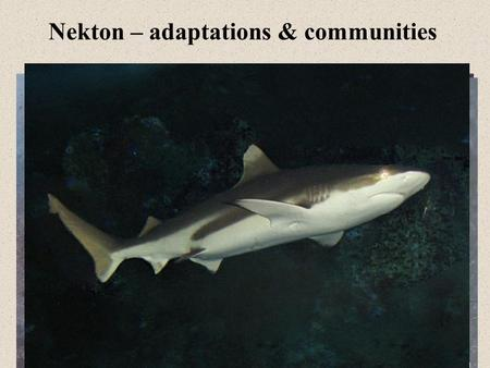 Nekton – adaptations & communities. Defense and Camouflage Large size: Most have few predators Camouflage: –Cryptic Body Shape (alteration of body shape)