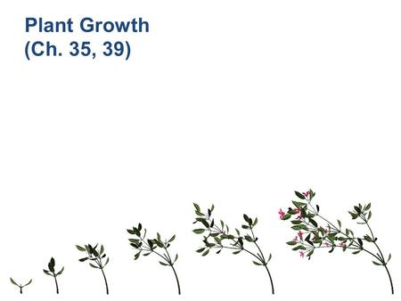 Plant Growth (Ch. 35, 39) Growth in Animals Animals grow throughout the whole organism – many regions & tissues at different rates.