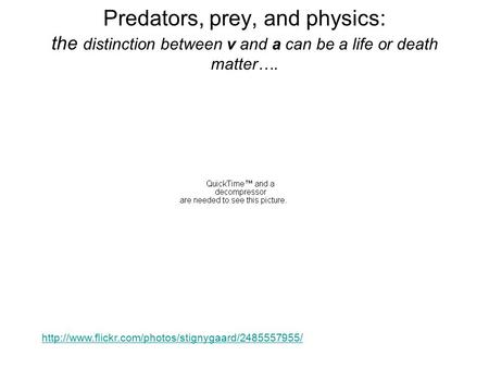 Predators, prey, and physics: the distinction between v and a can be a life or death matter….