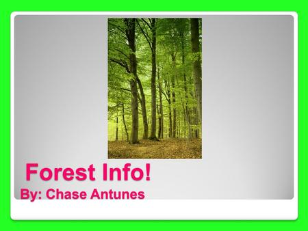 Forest Info! By: Chase Antunes Forest Info! By: Chase Antunes.