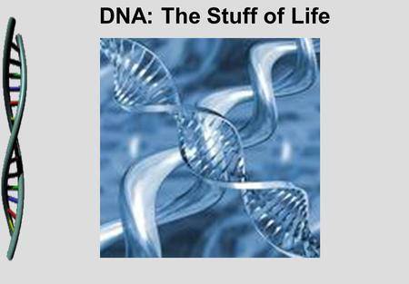 DNA: The Stuff of Life. Griffith and Transformation In 1928, British scientist Fredrick Griffith was trying to learn how certain types of bacteria caused.