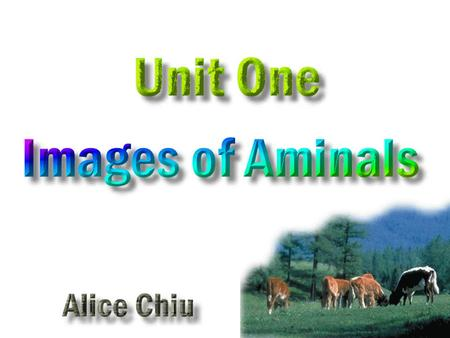 Activity One : Animal SimilesAnimal Similes Activity Two : Chinese Zodiac + Animal Idioms Chinese Zodiac + Animal Idioms Activity Three : Online Idiom.