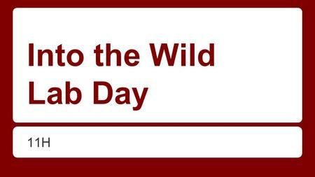 Into the wild essay topics