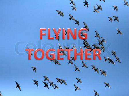 FLYING TOGETHER.