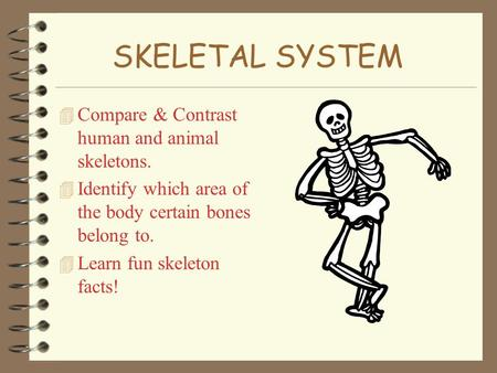 SKELETAL SYSTEM Compare & Contrast human and animal skeletons.
