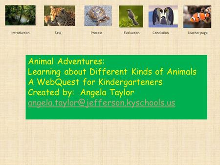 Learning about Different Kinds of Animals