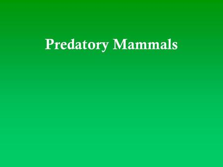 Predatory Mammals.  Mammals that kill and eat the other animals  Help out food chain by killing rather than starving overpopulated animals  Most are.
