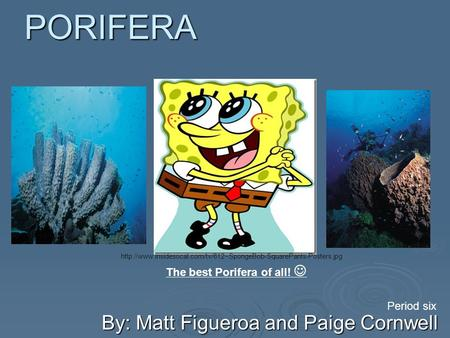 PORIFERA By: Matt Figueroa and Paige Cornwell Period six The best Porifera of all!