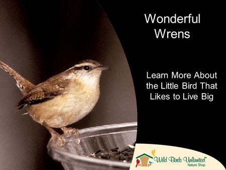 Learn More About the Little Bird That Likes to Live Big Wonderful Wrens.