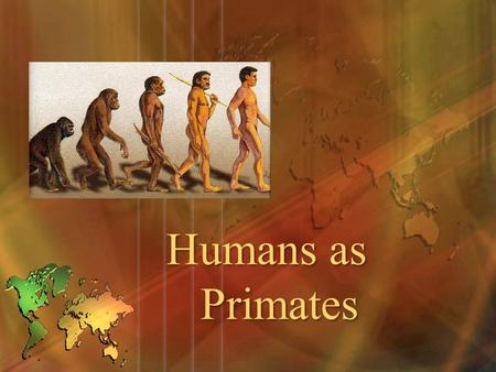 Humans as Primates. Objectives Describe primates and their evolution. Describe the major anatomical features that define humans as primates. Outline the.