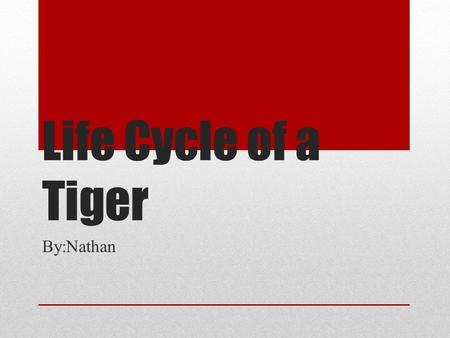 Life Cycle of a Tiger By:Nathan. Infant Stage After birth a new born tiger is only up to two to three pounds.They are blind at birth but are not completely.