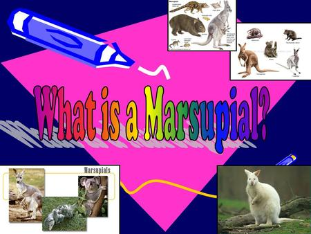 What is a Marsupial?.