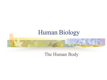 Human Biology The Human Body.