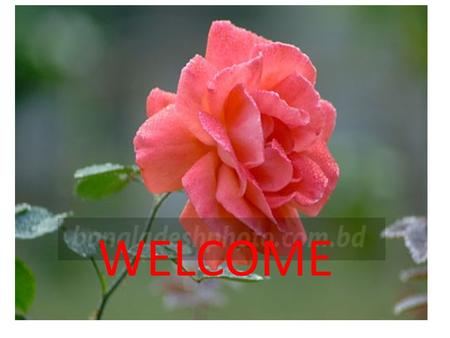 WELCOME. MOHAMMAD SHAHZAMAN TEACHER BATAKANDI S.S.A.A.H.M.H.SCHOOL  address: Mobile Number: MOHAMMAD SHAHZAMAN.