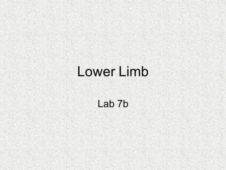 Lower Limb Lab 7b. Muscles Crossing Hip and Knee Joints Most anterior compartment muscles of the hip and thigh flex the femur at the hip and extend the.